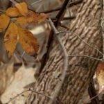 cat_woodland-shadow_950
