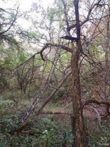 old ladderstand deer hunting