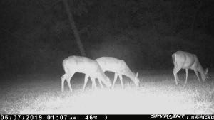 Spypoint Link-Micro deer pictures from app